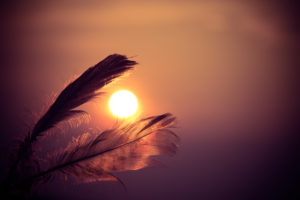 Two feathers framing an orange sun.